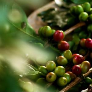 Маска из натурального кофе