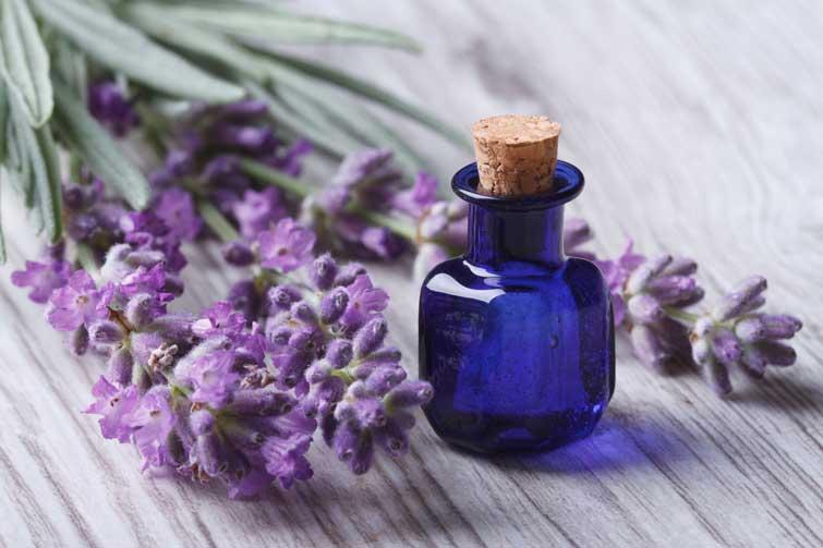Лавандовое масло и цветы лаванды